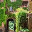 Small cat in ancient city overgrown with ivy — Stock Photo #51408313