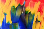 Colorful parrot plumage — Stock Photo