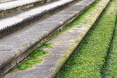 Algae on stairs in Venice — Stock Photo