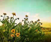 Summertime — Stock Photo