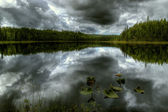 Forest lake in a storm — Stockfoto