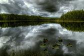 Lake forest em uma tempestade — Foto Stock