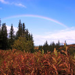 Alaskan Rainbow — Stock Photo