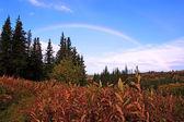 Alaskan regenboog — Stockfoto