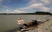 Talkeetna řeka v létě — Stock fotografie