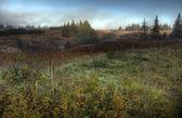 Nebbiosa estate dell'alaska — Foto Stock