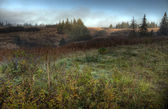 霧のアラスカの夏 — ストック写真