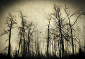 Scary winter woods — Stock Photo