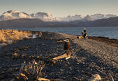 Eagles on an Alaskan Beach — Stock Photo