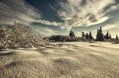 Deep snow on a sunny day — Stock Photo
