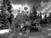 ここに来る太陽 — ストック写真