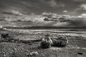 Icy Alaskan Beach Scene — Stock Photo