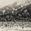 Stock Photo: Winter Shorebirds in Flight