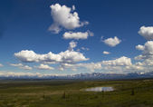 Denali Hwy in Summer — Stock Photo