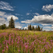 Alaskan Summer — Stockfoto