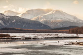 Chilkat Bald Eagle Preserve in winter — Stockfoto