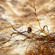 Eagle at Sunset — Stock Photo
