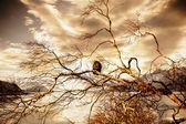 老鹰在日落时 — 图库照片