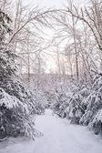 冬天的路径 — 图库照片