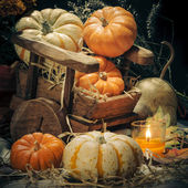 Pumpkins still life — 图库照片