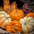 Pumpkins still life — Stock Photo #27329381