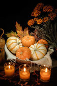 Pumpkins still life — Foto de Stock
