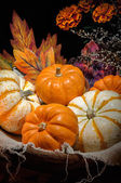 Pumpkins still life — Foto Stock