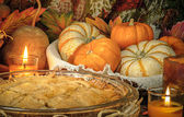 Pumpkins still life — Stockfoto