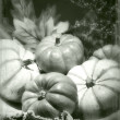 Pumpkins still life vintage tintype — Stock Photo
