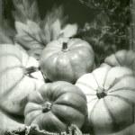 Pumpkins still life vintage tintype — Stock Photo