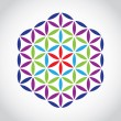 Flower of life - Foto de Stock
