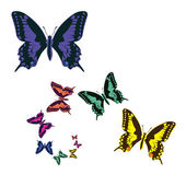 Color butterflies — Stock Photo