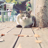 Cat lying in garden — Stock Photo