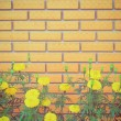 Wall with flower  — Stock Photo