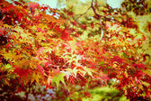 Autumn maple leaves in garden with retro filter effect — Fotografia Stock