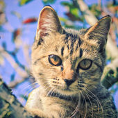 Cute cat on the tree with retro filter effect — Stock Photo