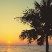 Coconut palm tree with sunrise and retro filter effect — 图库照片