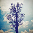 Silhouette of tree — Stock Photo