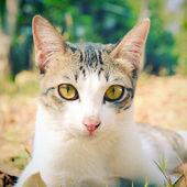 Kedi çim üzerinde yalan — Stok fotoğraf