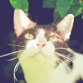 Cat in garden — Stock Photo