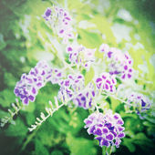 Purple flower — Photo