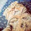 Sleeping cat — Stock Photo #37034553