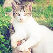 Gatto in giardino — Foto Stock