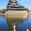 Stock Photo: Castle and two swans