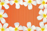 Frangipani flower frame — Stock Photo