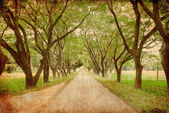 Road of green trees — Stock Photo