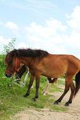 Betande hästar — Stockfoto