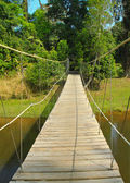 Bridge to jungle — Stock Photo