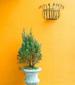 Bitki vazo içinde — Stok fotoğraf