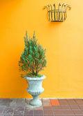 Rostliny v váza — Stock fotografie